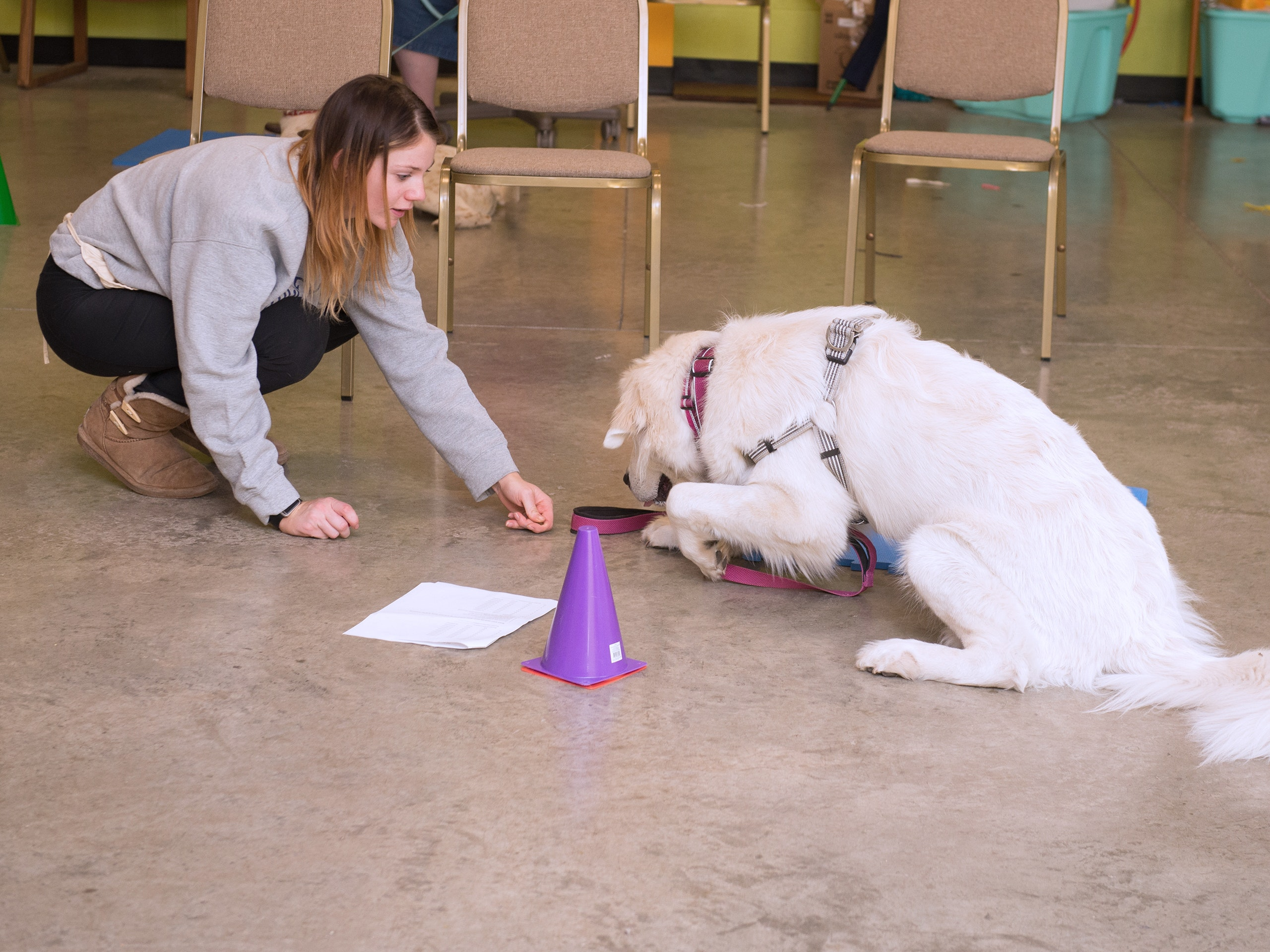 Female student presenting a treat to a dog during a training exercise.